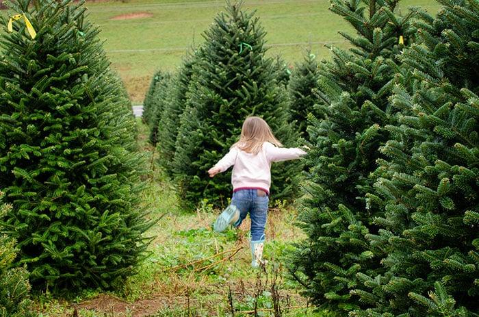 Things to Do in North Carolina in November Christmas Tree Farms