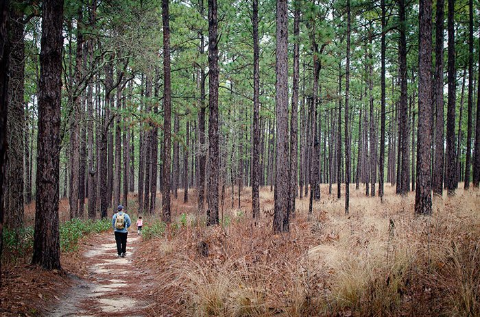 Things to do in Southern Pines Weymouth Woods