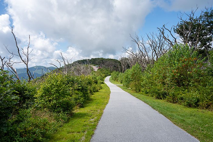 Wayah Bald trail