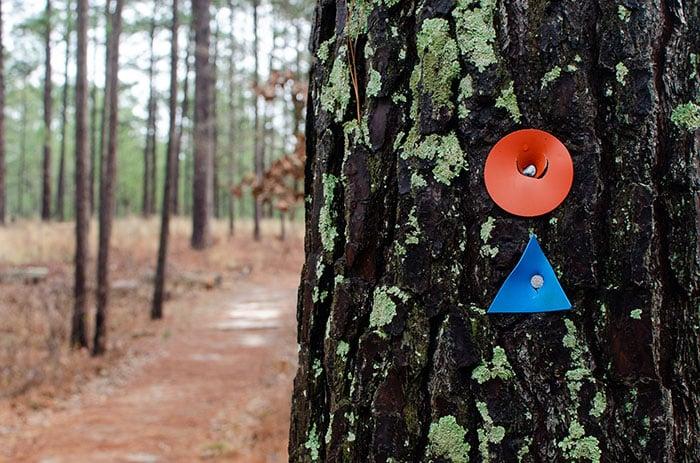Weymouth Woods Southern Pines blaze