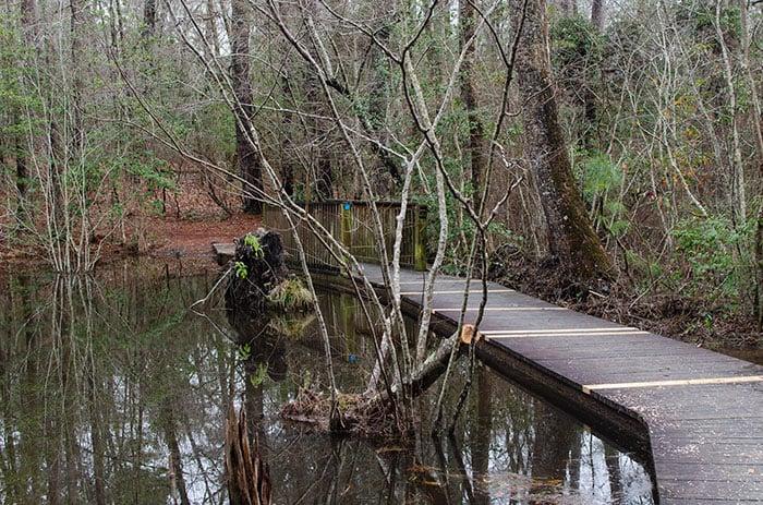 Weymouth Woods Trail with bridge