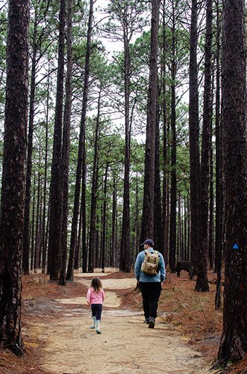 Weymouth Woods hiking
