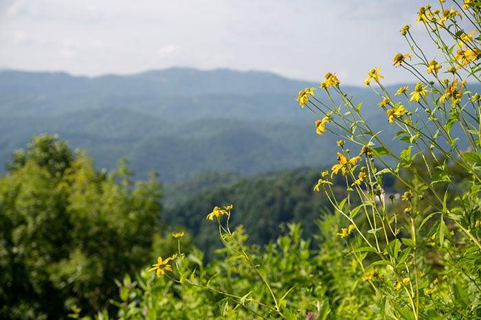 Blue Ridge Parkway nearby North Carolina Arboretum