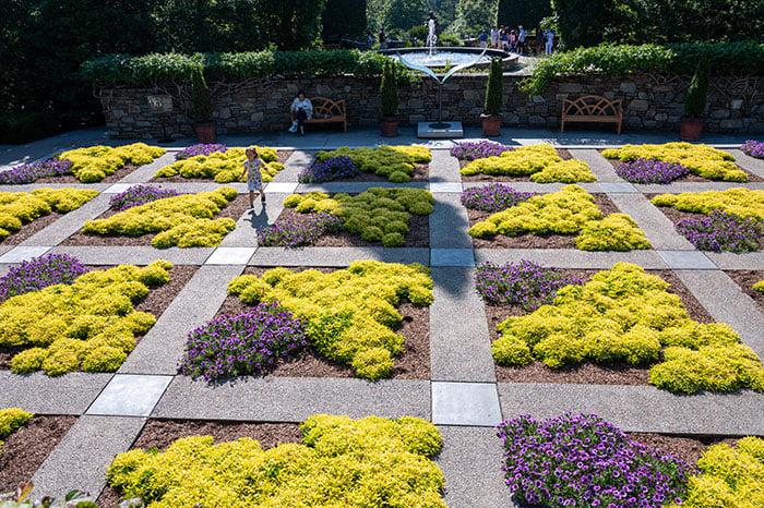 NC Arboretum beautiful flowers