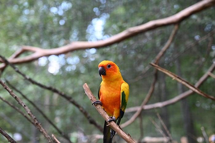 Things to Do in North Carolina Sylvan Heights Bird Park Halifax County