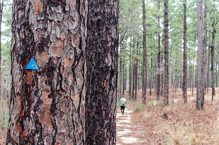 Things to Do in North Carolina Weymouth Woods Sandhills Nature Preserve