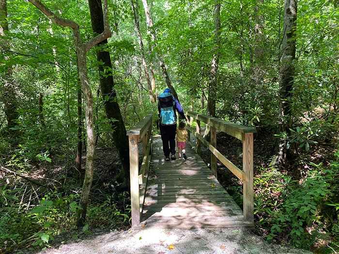 Toms Creek Falls accessible trail