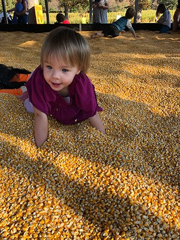 NC Pumpkins Page Farms