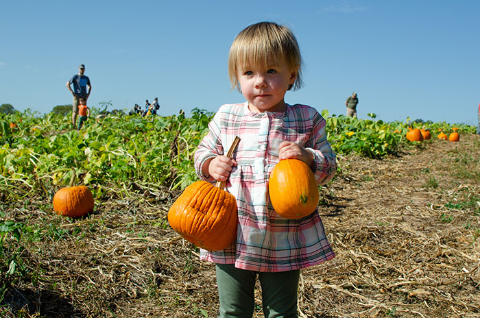 Pumpkin Patches NC Riverbend Farms