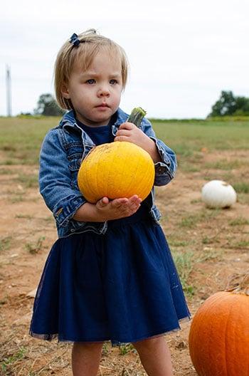Pumpkin Patches in NC Millstone Creek
