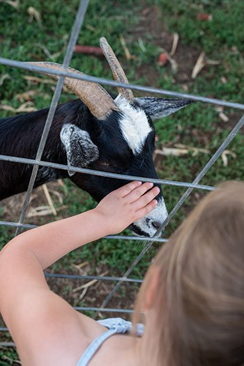 Things to do in Mooresville Carrigan Farms animals